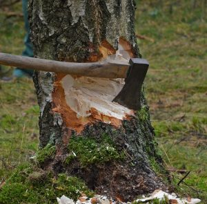 Don't Cut Down the Trees Brother Woodcutter